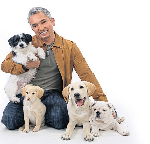 Cesar Millan Dog Training Cost
