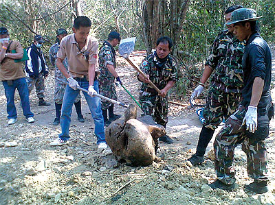 Livestock and wildlife authorities examine part of an elephant carcass found in the Kaeng Krachan National Park before removing it for an autopsy.