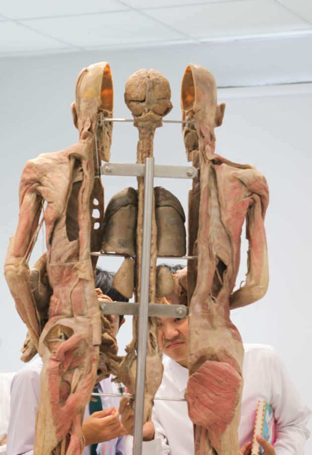 Museum of human body in health & disease | Bangkok Post: learning