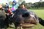 Buffalo therapy for autistic children