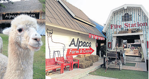 Bangkok post article for Alpaca view farm cuisine