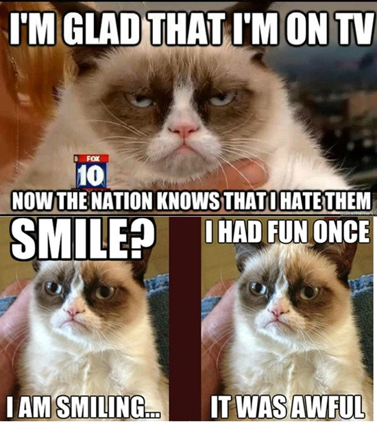 Grumpy Cat, A Feline Superstar
