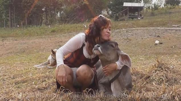 calf living on dog s milk bangkok post learning
