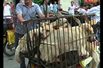 Dog meat festival in China city angers some animal rights activists