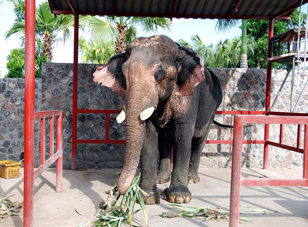 Plai Boonmee is recovering at his residence in Hua Hin.