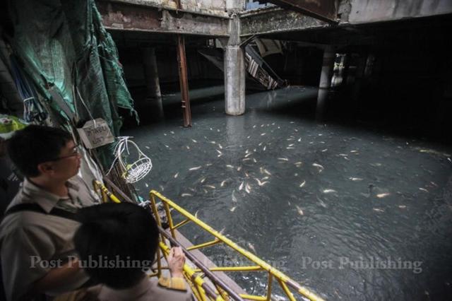 Bangkok 39 S Hidden Fish Pond Bangkok Post Learning