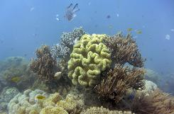 Plan won't save Great Barrier Reef: Australian scientists
