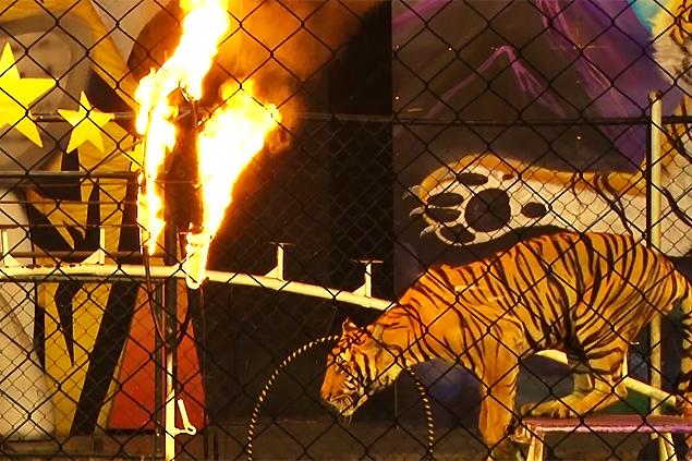 Sri Racha Tiger Zoo