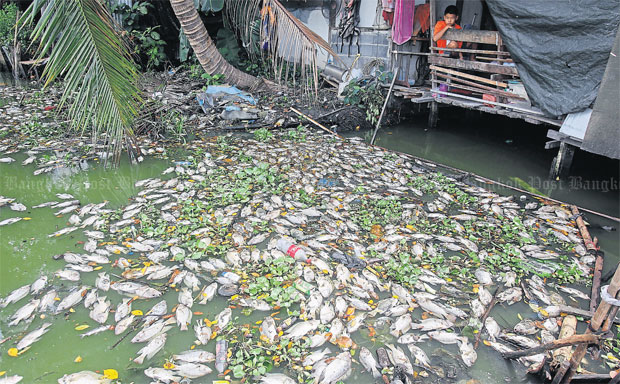 how to dispose of dead fish in pond
