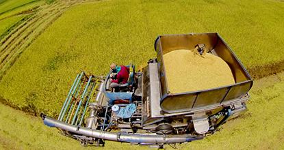 Thailand Dominates Rice Trade Amid Sale Of Reserves