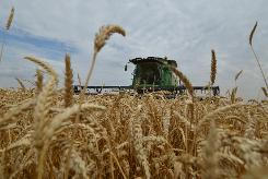 Russia curbs grain exports while battling currency crisis