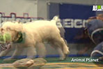 Puppy Bowl tops this week's animal roundup