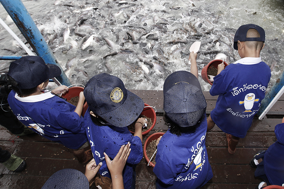 A group of children make merit by releasing fish and feeding them at Hong Pathummawas temple in Pathum Thani province.