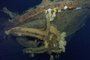 Huge WWII warship reportedly found in Philippines