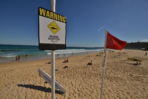 Man fighting for life after shark attack