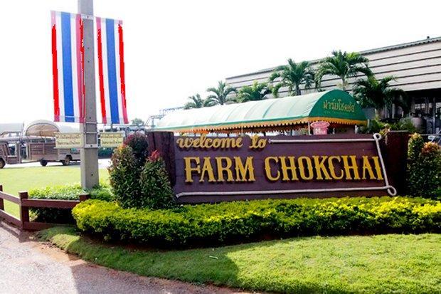 chokchai farm business report Report abuse transcript of  milk และธุรกิจที่พักในรูปแบบ boutique camp ภายใต้ชื่อ farm chokchai.