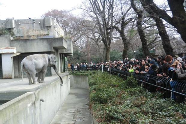 Elderly Elephant Named in Petition Drive Dies in Japan Zoo