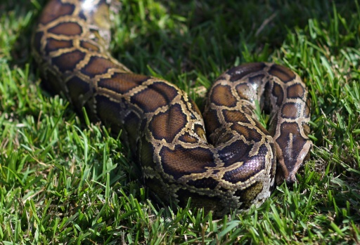 Local man on mend after toilet snake scare