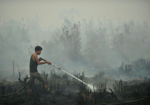 Indonesia plans peat monitoring system to curb choking haze