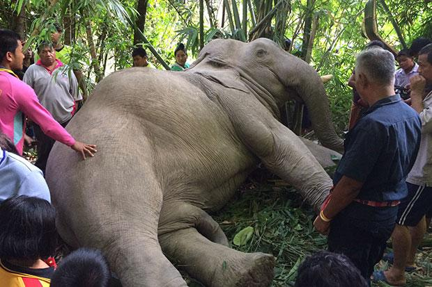Elephant electrocuted by high voltage lines
