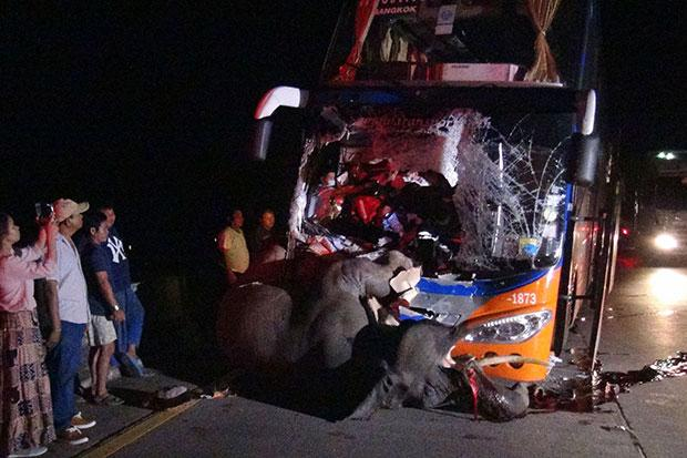 A male elephant, 8, is killed after being hit by an interprovincial bus in Hang Chat district, Lampang province, on late Friday night. The bus driver was badly hurt while other passengers were unhurt.