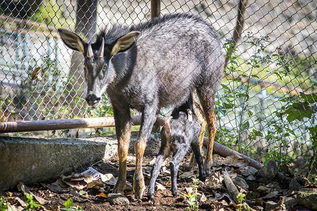 Chiang Mai zoo has a new baby   Bangkok Post: news