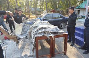 Man arrested with smuggled crocodile skins