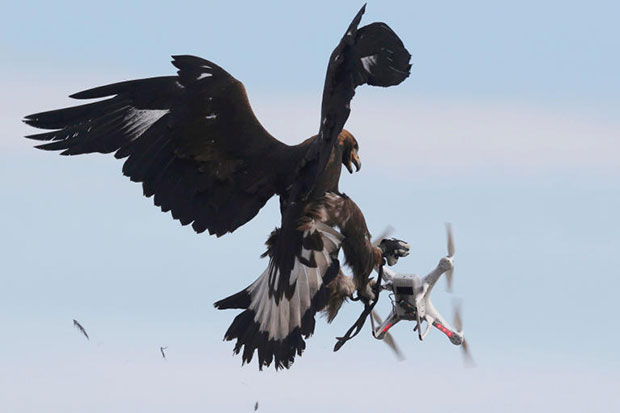 France trains eagles to down drones