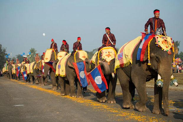 Elephants on parade in Laos as numbers dwindle | Bangkok Post: news