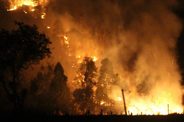Fire rages in Khon Buri forest reserve | Bangkok Post: news