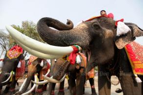Kraal owners to march 100 elephants to Bangkok protest