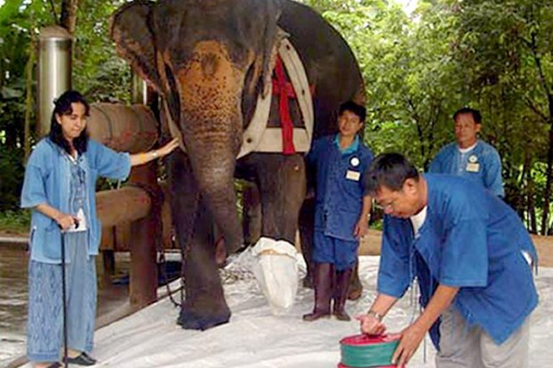 Elephant foundation in critical need of aid