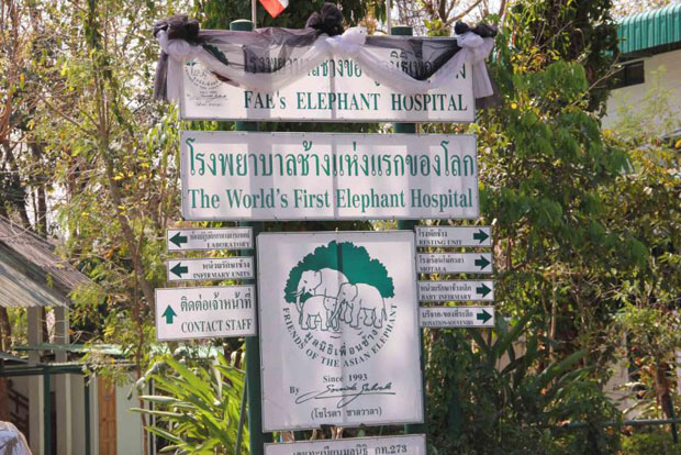 Donations pour in to elephant foundation