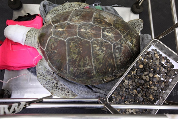Turtle that swallowed 1000 coins dies