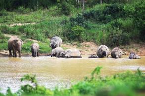 Food gatherer killed by wild elephants