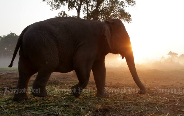 Elephants rescued from mud in Cambodia