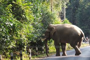 Khao Yai takes action against visitors who taunt elephant