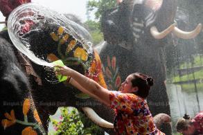 Songkran with elephants
