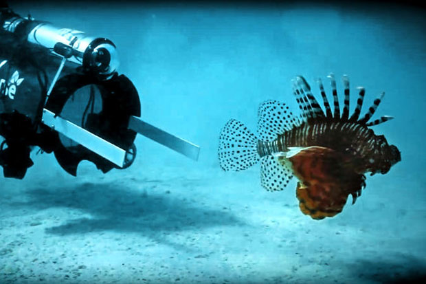 Robots, chefs hope to bring invasive lionfish to restaurants