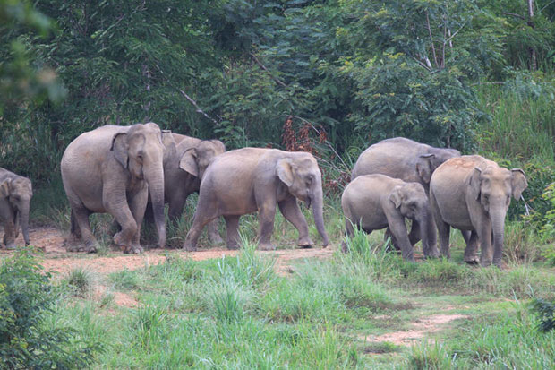 Budget sought to keep jumbos from farmland