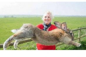 United under fire again as giant rabbit dies on flight