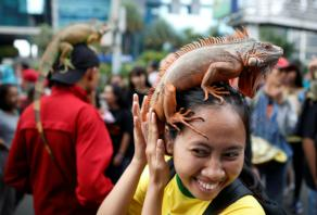 Indonesia arrests Japanese man in reptile smuggling