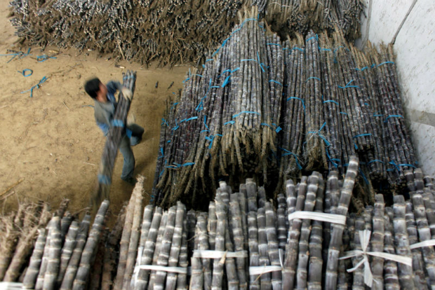 Bitter news: China slaps hefty import duties on sugar imports