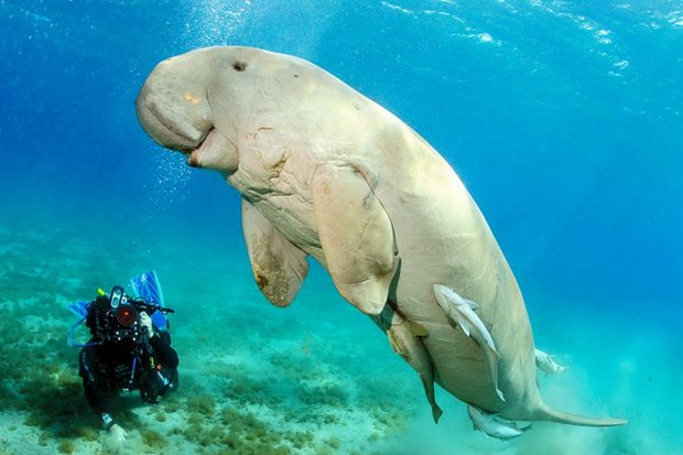 Parks Dept orders dugong project to be revised