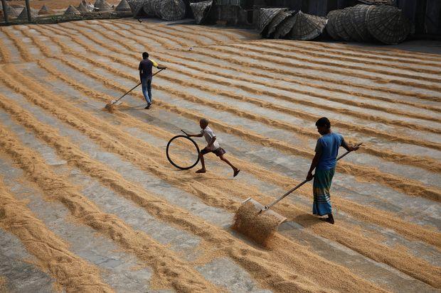 Bangladesh to speed up rice imports