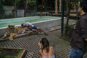 Animal farms fuel cruel, illegal trade in rare wildlife