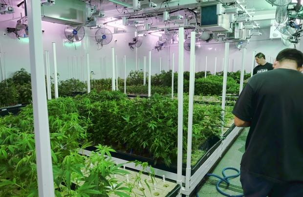 Medical marijuana delays frustrate patients