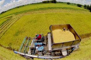 Thai rice: Future brightens after over-supply crisis passes