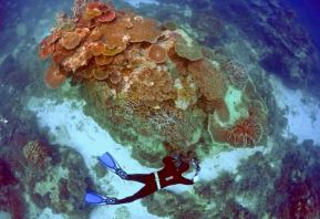Great Barrier Reef valued at $42.5 billion