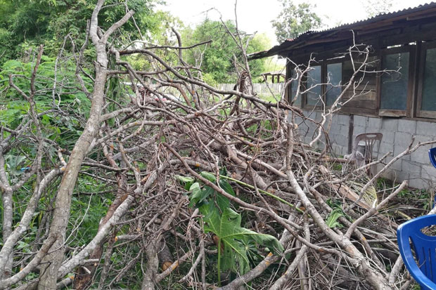Woman's tree ordeal ends